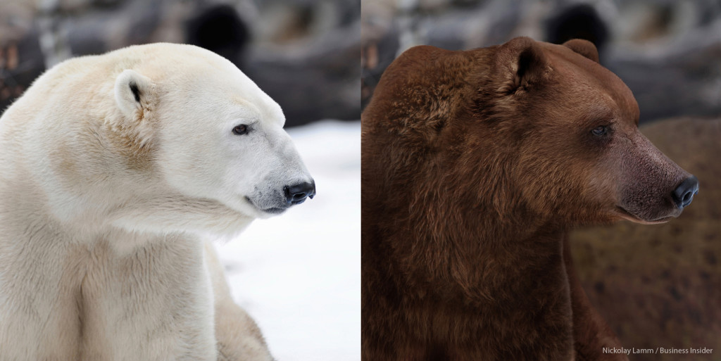 Polar and Grizzly Bear